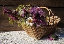 Kwiaty z ląki. Dzień dobry! Miłego dnia!