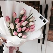 tulipany ❤