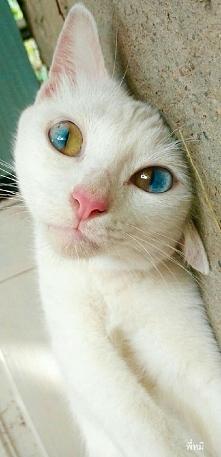 niesamowite oczy...