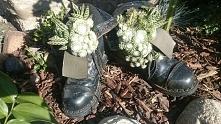 Buty w ogrodzie