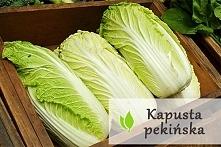 Kapusta pekińska - samo zdrowie ! :)