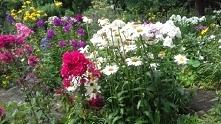 ogród botaniczny ☺