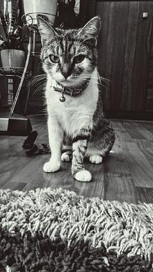 kotałek :*