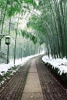 droga bambusowa, Japonia