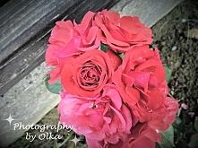 Róże *.*