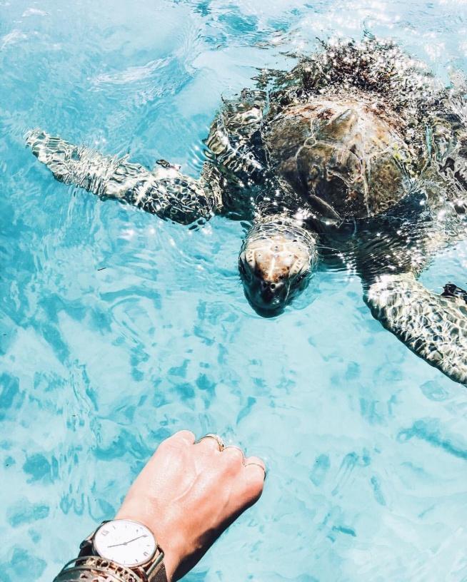 żółwik! :D