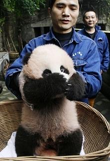 Mała Panda ;)