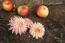 Kwiaty jesieni dalie