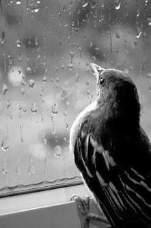 .... deszczyk...