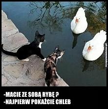 handelek :-)