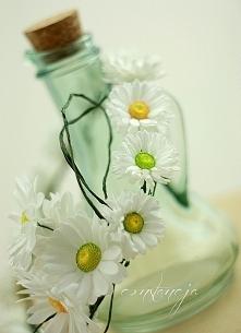 stokrotki - wianek Kwiaty r...