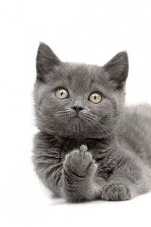 Oj, niegrzeczny kotek, niegrzeczny... :)