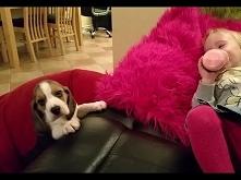 Ten szczeniak zrobi wszystko aby wskoczyć na kanape