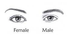female/male