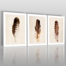 Piękno ptasich piór - nowoc...