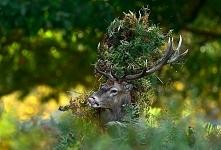 W lesie... być...