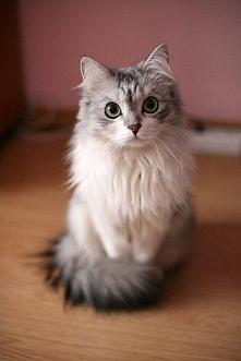 Zwykłe zdjęcie kota, ale ta...