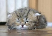 Spokojnych snów :)