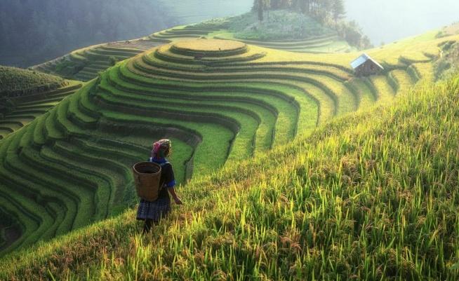rasy ryżowe w Longsheng (chin. upr. 龙胜梯田, chin. trad. 龍勝梯田, pinyin: Lóngshèng Tītián) lub inaczej Tarasy ryżowe Grzbietu Smoka