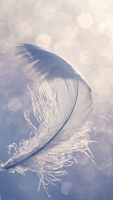 feather ❤