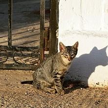 I love cat ;)