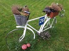 jesienne wrzosy. rower. ogród