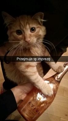 Koteł party
