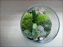 Ogród w słoiku