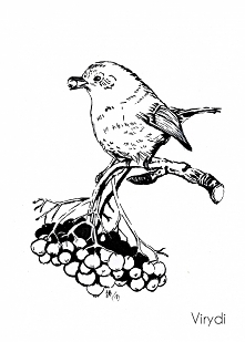 Dzień 1 - Small bird