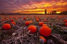 """Atomic pumpkin patch&..."
