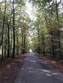 •• droga przez las ••