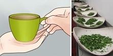 Właściwości zielonej herbat...