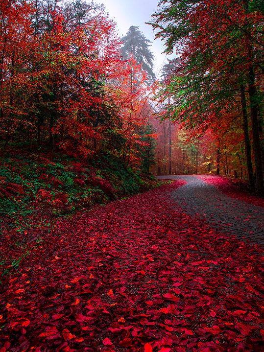 ah ta jesień <3