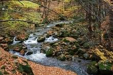 ah góry góry, jesienią jesteście najpiękniejsze... :)  /zdjęcie prywatne nale...