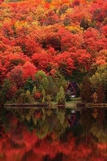 Jesień :o (fotografia z homebook.pl)