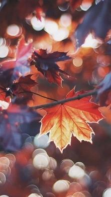 Czy tylko ja mam świra na punkcie zbierania liści?Idąc przez park nazbieram mnóstwo a później ciężko mi się rozstać.Jesień jest cudowna :)
