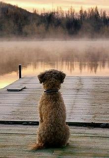 Dog#Autumn ♡