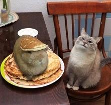 Kot nigdy nie jest winny xD