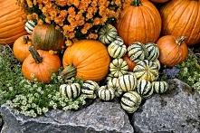 Jesień to czas Halloween, a więc wykrawanie dyni. Różne śmieszne bądź straszne miny będą widniały w tym roku na studni przed domem :)