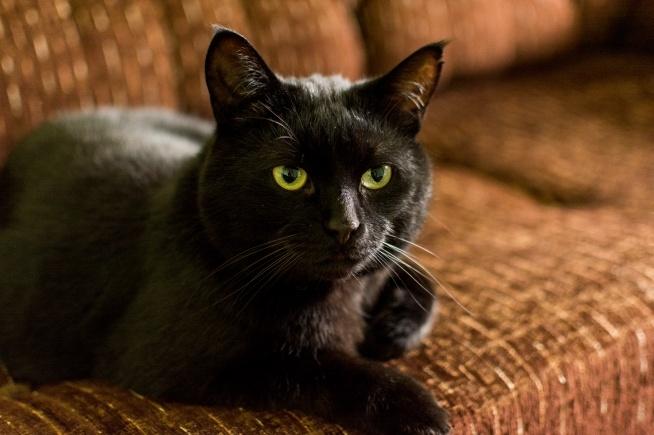 Mój kot Nachos :>