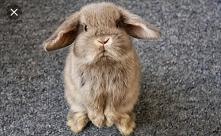 Puchata kuleczka z uszami :)