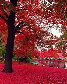 Amsterdam - Holandia ❤️