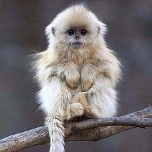 Małpka *.*