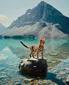 Jezioro Bow, Kanada