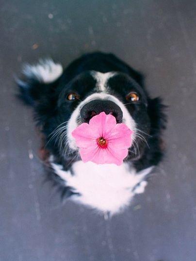 No i jak nie przyjąć kwiatka od takiego słodziaka? :-)