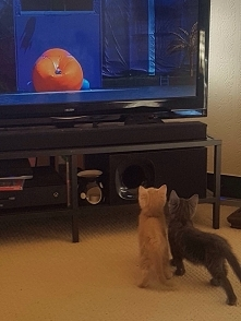 Max i Lolek lubią telewizje <3
