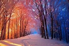 Wczoraj słoneczna i piękna niedziela a dzisiaj juz deszczowy i ponury poniedziałek. Z utęsknieniem czekam na mroźną zimę ;)