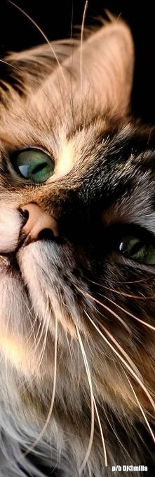 Miau :-)