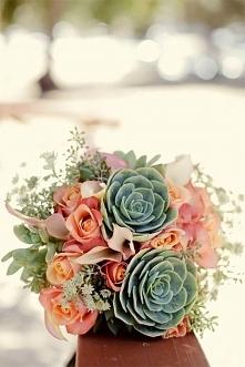 sukulenty i kwiaty