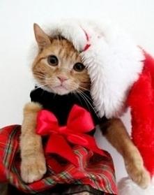 Coraz Bliżej Święta <3 <3